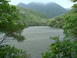 Photo by:御蔵島★イルカの棲む島ぐらし (Mikura)